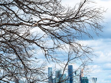 view from observation deck on Sparrow Hills (Vorobyovy Gory) - dried tree and skyscrapers of Moscow-city district under dark blue clouds Banco de Imagens