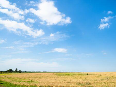 rural landscape - blue afternoon sky over yellow wheat field in summer in Kuban region of Krasnodar Krai of Russia Imagens