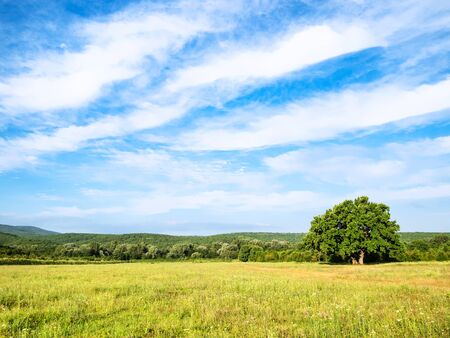 natural background - blue sky with white clouds over green meadow on summer day in the Caucasus (in Kuban region of Krasnodar Krai of Russia) Imagens