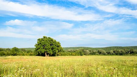 natural background - panoramic view of green meadow under blue sky on summer day in the Caucasus (in Kuban region of Krasnodar Krai of Russia)