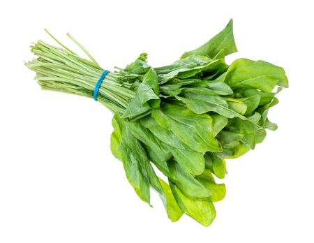 bundle of fresh green sorrel herb cutout on white background 版權商用圖片