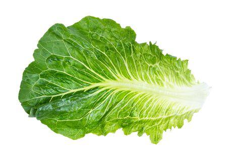 leaf of fresh Romaine lettuce cutout on white background
