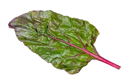 wet leaf of beet plant ( chard) cutout on white backgrounds
