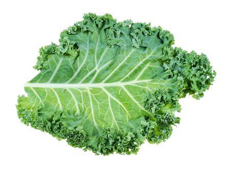 single leaf of curly-leaf kale (leaf cabbage) cutout on white background