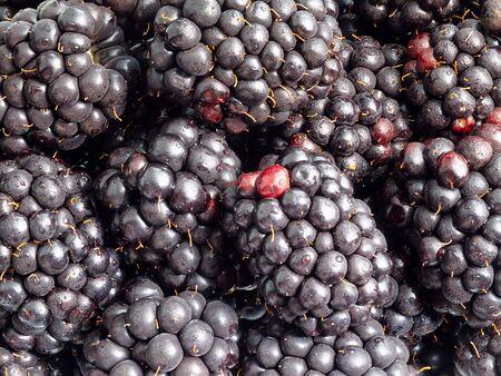 Fondo de alimentos naturales - muchas frutas frescas de mora de cerca Foto de archivo