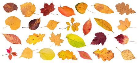 set of various colorful fallen leaves cut out on white background