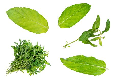set of fresh mint herbs cut out on white background