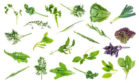 set of various fresh twigs of garden herbs cut out on white background