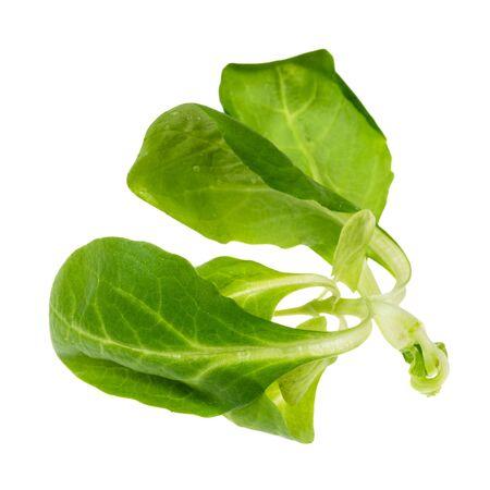 single twig of corn salad (mache) cutout on white background