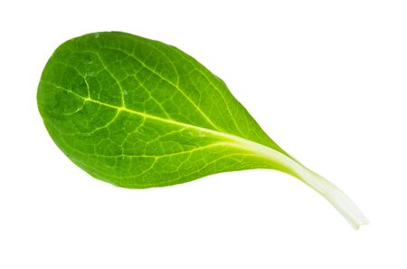 green leaf of corn salad (mache) cutout on white background Stock Photo