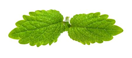 pair of leaves of lemon balm (melissa officinalis) plant cutout on white background
