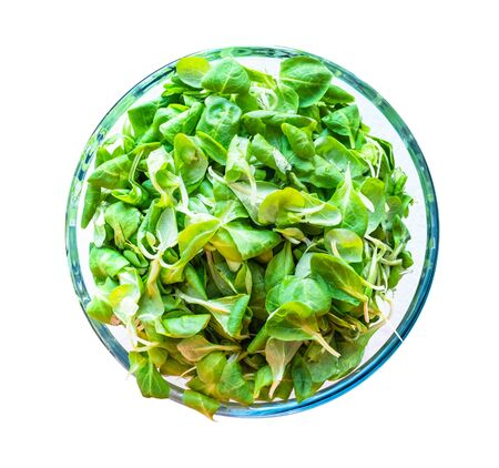 top view of fresh corn (mache) salad in glass bowl cutout on white background Stock Photo