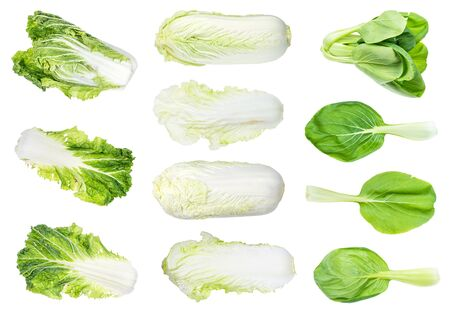 various fresh leaf and head Chinese cabbages cut out on white background Banco de Imagens
