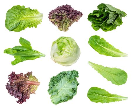 various fresh leaf salads cut out on white background