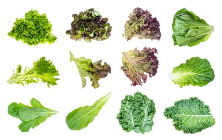 various fresh leaf lettuce plants cut out on white background