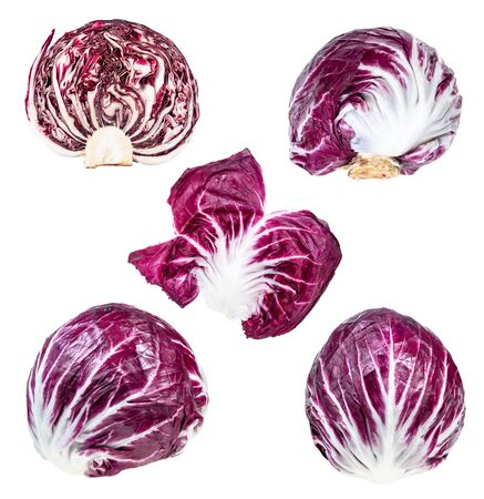 various fresh heads and leaf of Radicchio (Italian leaf chicory) plant cut out on white background