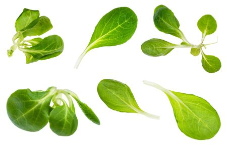 green twigs and leaves of fresh corn (mache) salad plant cut out on white background Banco de Imagens