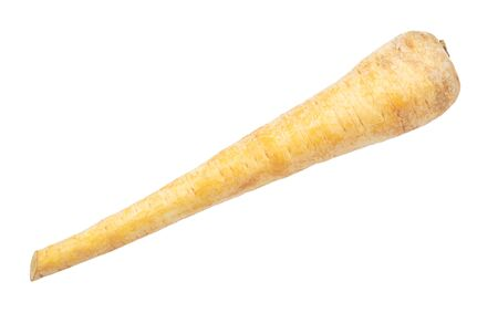 single root of Parsnip (pastinaca sativa) cut out on white background 스톡 콘텐츠