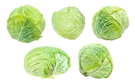 various fresh savoy cabbages cut out on white background 스톡 콘텐츠