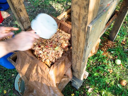 laying crushed fresh apples in the tray of wooden press for squeezing natural juice to produce cider in village