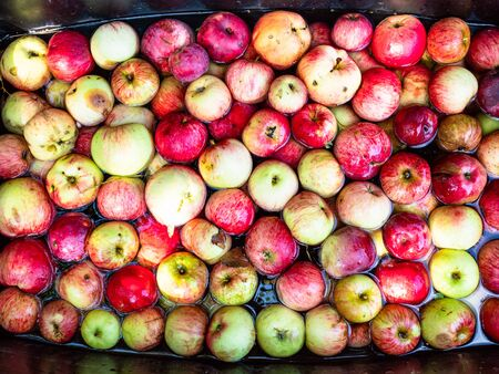 top view of basin with many fresh apples washing in water before putting them to juice press to produce cider in village
