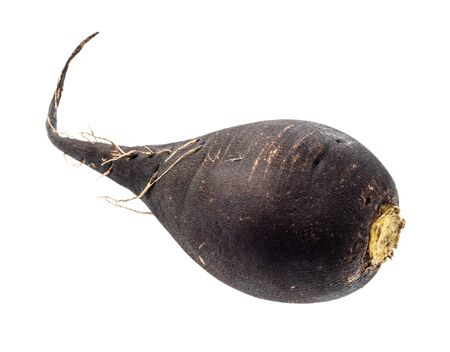 fresh black radish taproot cut out on white background 스톡 콘텐츠