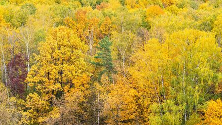 panoramic view of colorful forest on autumn day