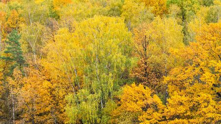 panoramic view of yellow forest on autumn day 스톡 콘텐츠