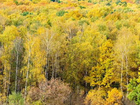 above view of clearing in yellow forest on autumn day 스톡 콘텐츠