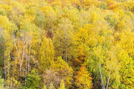 natural background - yellow trees in forest on autumn day 스톡 콘텐츠