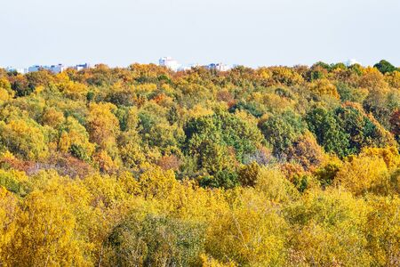 tops of colorful trees in city park on sunny autumn day