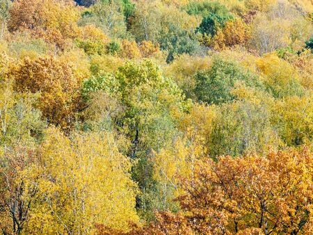 natural background - lush foliage of various trees in forest on sunny autumn day