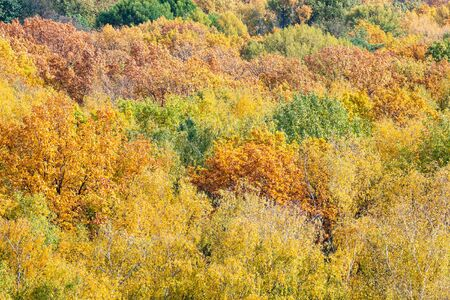 natural background - dense foliage of various trees in forest on sunny autumn day