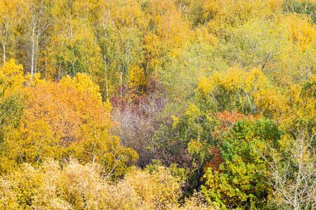 natural background - various colorful trees in forest on sunny autumn day