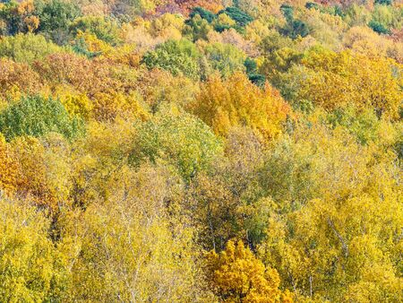 aerial view of yellow crowns of trees in forest on sunny autumn day