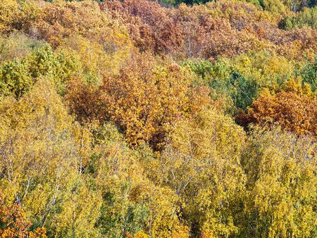 aerial view of colored tops of trees in forest on sunny autumn day 스톡 콘텐츠