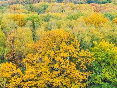above view of yellow oak tree in colorful forest on autumn day