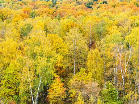 above view of colorful forest on autumn day