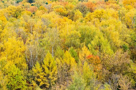 above view of colorful woodland on autumn day 스톡 콘텐츠
