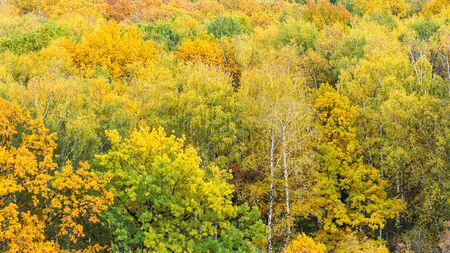 panoramic view of colorful woodland on autumn day