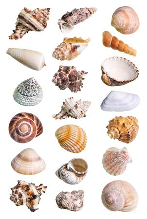 collage from various shells of mollusks cutout on white background Stock Photo