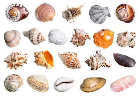 lot of various shells of mollusks cutout on white background Zdjęcie Seryjne