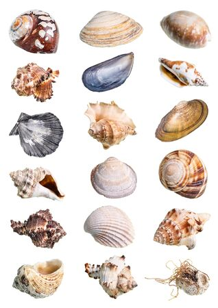 various shells of mollusks cutout on white background