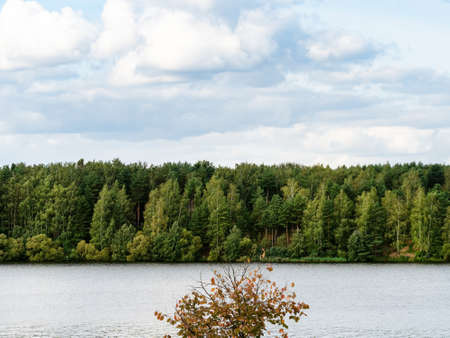 view of green forest on coast of lake in cloudy September evening