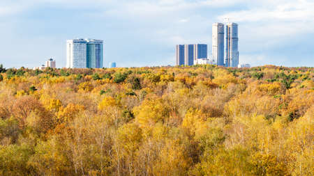 panoramic view of yellow forest and high-rise houses on horizon on sunny autumn day