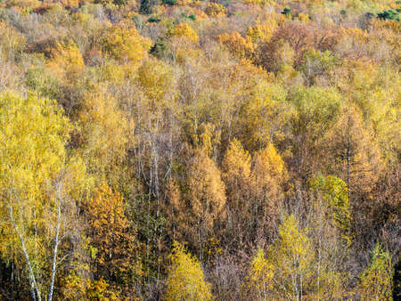 above view of colorful dense forest on sunny autumn day