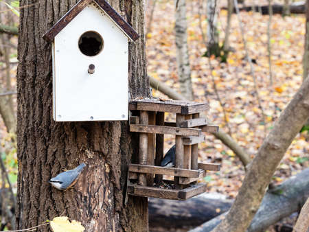 pair of nuthatches in old handmade wooden feeder near handmade bird house on pine tree trunk in city park on autumn day Archivio Fotografico