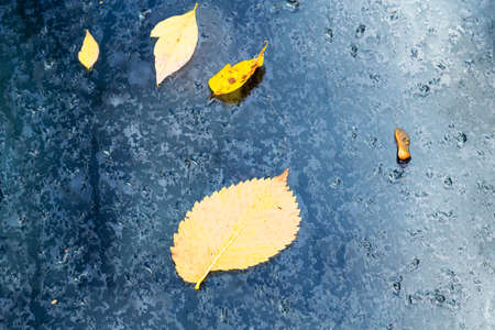 yellow fallen leaves stuck to wet glass outdoors on rainy autumn day