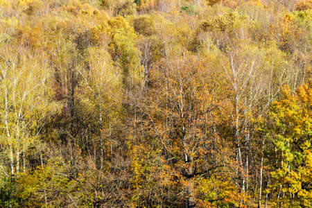 above view of colorful deciduous forest on sunny autumn day