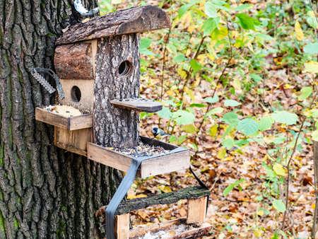 handmade wooden bird feeder from pine planks on tree in city park on autumn day Archivio Fotografico